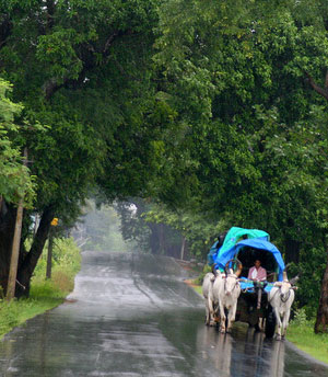 Monsoon Packages